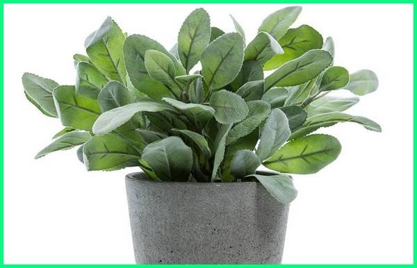 tanaman hias indoor media air, jenis tanaman hias indoor dengan media air, jenis tanaman hias media air, tanaman hias menggunakan media air