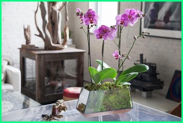 bagaimana cara merawat bunga anggrek, bagaimana cara memelihara bunga anggrek, cara bunga anggrek cepat berbunga, cara merawat bunga anggrek, cara merawat bunga anggrek agar tumbuh subur, bagaimana cara merawat bunga anggrek