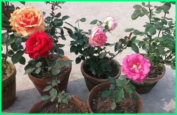 Tanaman Bunga Hias Yang Cantik Di Dalam Pot Silahkan Menanan Dunia Fauna Hewan Binatang Tumbuhan