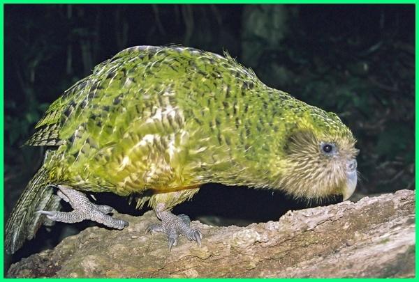 hewan yg berisik di malam hari, hewan apa yang berisik, hewan paling berisik, hewan apa yang tidurnya berisik, hewan vertebrata yang berisik