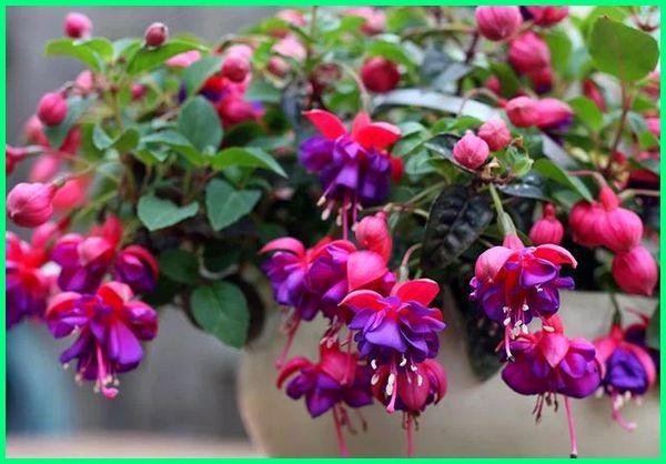 jenis tanaman hias bunga yang mudah perawatannya