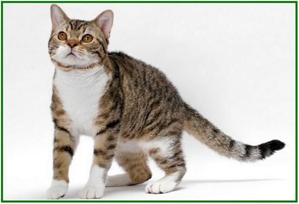 13 Daftar Jenis Kucing Paling Mahal di Dunia - Dunia Fauna , Hewan ...