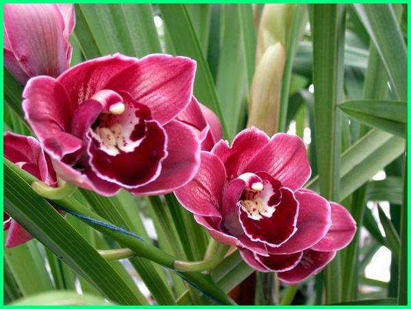 macam2 jenis bunga anggrek, macam jenis bunga anggrek, gambar macam macam jenis bunga anggrek, jenis bunga anggrek pink, jenis bunga anggrek yang paling mahal, jenis bunga anggrek dan penjelasannya, jenis pohon bunga anggrek, semua jenis bunga anggrek, jenis tanaman bunga anggrek, varian jenis bunga anggrek