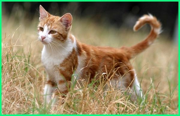 Nama Kucing Jantan Yang Bagus Lucu Dan Keren Dunia Fauna Hewan Binatang Tumbuhan Dunia Fauna Hewan Binatang Tumbuhan