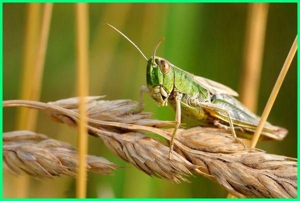 peranan serangga bagi kehidupan, peran serangga bagi kehidupan manusia, manfaat serangga bagi kehidupan, peran negatif serangga bagi kehidupan manusia, peranan serangga dalam kehidupan manusia, makalah peranan serangga dalam kehidupan manusia, 5 peranan serangga dalam kehidupan manusia