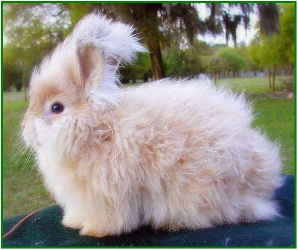 produk dari dua kelinci, produk dari kulit kelinci, produk yang dihasilkan dari budidaya kelinci, produk atau hasil dari beternak kelinci, produk kulit kelinci, produk olahan kelinci, produk 2 kelinci