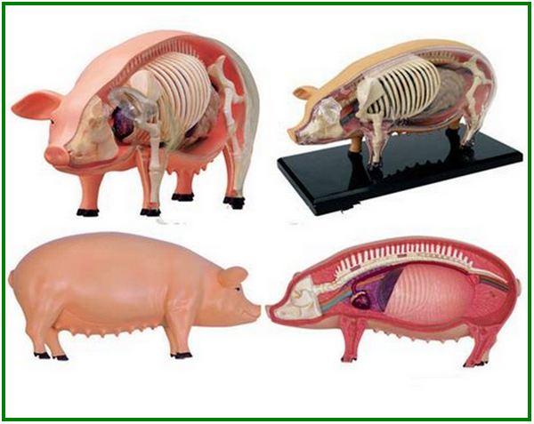 produk babi dan turunannya, produk babi di indonesia, produk kulit babi, produk olahan babi, produk berbahan babi, 185 produk dari babi, produk gelatin babi