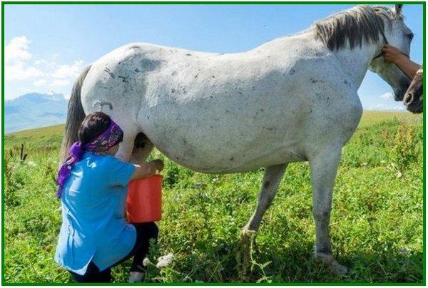 jenis produk yang dihasilkan dari kuda, horse product