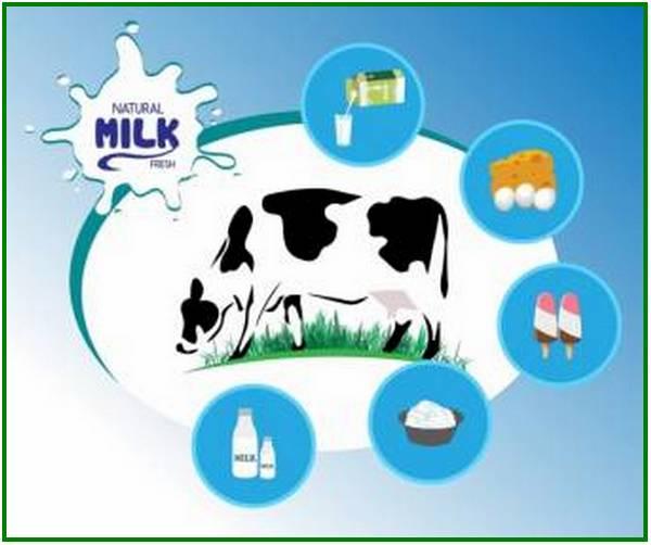 produk olahan dari sapi, produk makanan dari sapi produk sapi, berikut hasil produk samping dari sapi adalah, produk yang berasal dari sapi, contoh produk dari daging sapi, produk daging sapi, produk susu sapi dan turunannya, hasil produk dari sapi