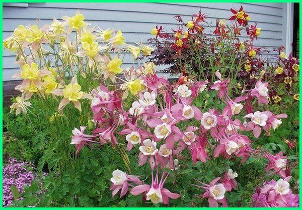 tanaman hias bunga yang mudah perawatannya, tanaman hias bunga yang tahan panas, tanaman hias bunga yang banyak diminati, tanaman hias bunga yang lagi trend, tanaman bunga hias yang unik