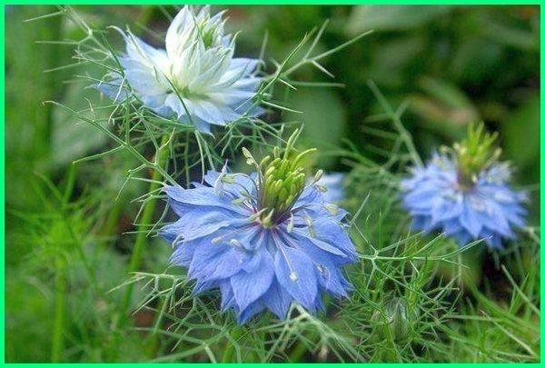 tanaman hias bunga yang mudah dibudidayakan, tanaman hias bunga yang wangi, tanaman hias bunga yang lagi trend, tanaman hias bunga yang banyak diminati, apa yang dimaksud tanaman hias bunga, apa yang dimaksud dengan tanaman hias bunga