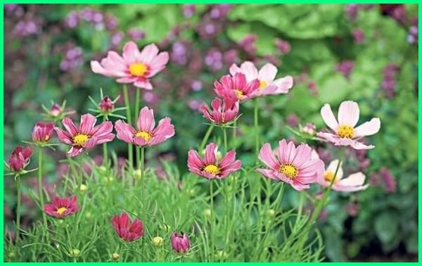 tanaman yang aman bagi anjing, tanaman yang aman bagi kucing, tanaman yang sehat bagi hewan peliharaan, tanaman yang sehat untuk binatang peliharaan