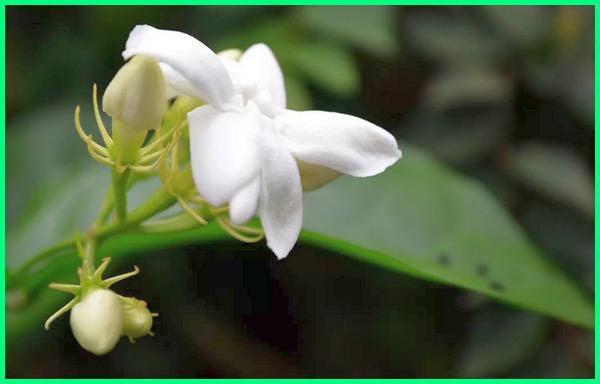 20 Flora Dan Fauna Langka Asli Indonesia Beserta Penjelasannya Dunia Fauna Hewan Binatang Tumbuhan Dunia Fauna Hewan Binatang Tumbuhan