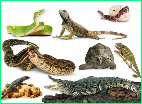apa saja peranan reptilia bagi kehidupan, apa saja contoh hewan reptil, reptilia, reptil adalah, reptile, tiga manfaat reptil, manfaat dan kerugian reptil, manfaat reptil bagi manusia, contoh dan manfaat reptil, manfaat reptil dan contohnya, manfaat reptil bagi kehidupan manusia