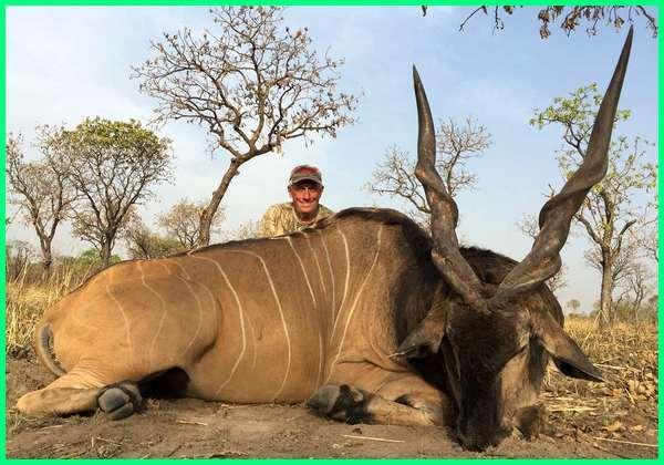 hewan tanduk panjang dan besar