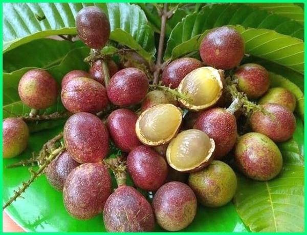 buah buahan mahal di indonesia, buah yg mahal di indonesia, buah yang mahal di indonesia, buah langka yang mahal, buah mahal di indonesia, buah mahal dan langka, buah mahal di malaysia, buah mahal di korea, buah mahal 2018-2019-2020-2021