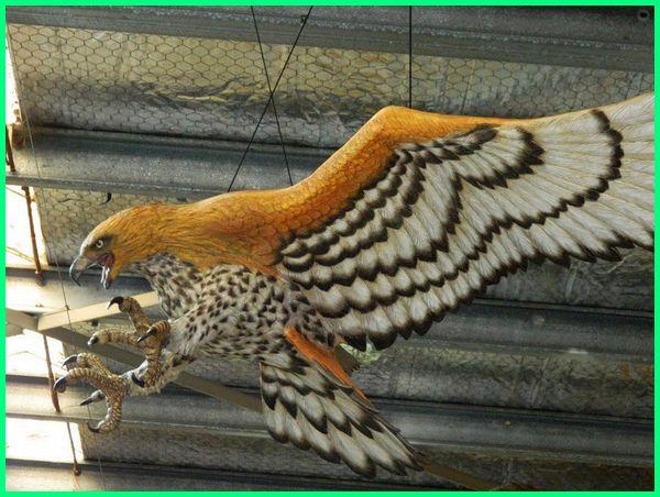 burung elang besar, burung elang yang paling besar