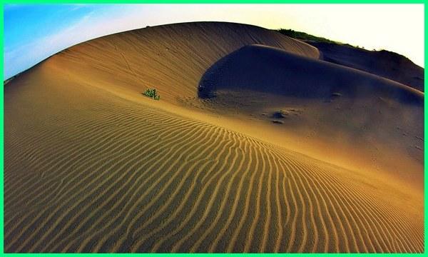 gurun pasir di indonesia, gurun pasir jogja, gambar gurun pasir, gurun pasir indonesia