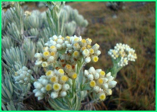 tanaman endemik pulau jawa, tanaman dari pulau jawa barat, tengah, timur, flora khas indonesia, flora indonesia dan asalnya