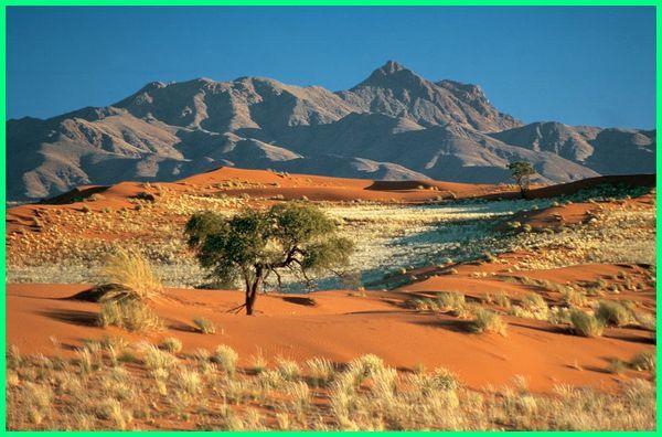 gurun kalahari terletak di benua afrika bagian, gurun kalahari terletak di negara, gurun kalahari ada di benua, gurun kalahari terdapat di benua, gurun kalahari terletak di mana, gurun kalahari di afrika, gurun kalahari di benua, gambar gurun kalahari, gurun kalahari berada di negara afrika