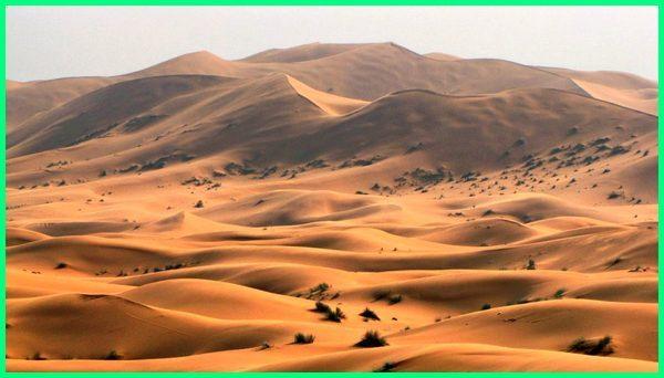 gurun pasir arab saudi, gurun pasir di arab saudi, gurun pasir di jazirah arab, Arabian Desert