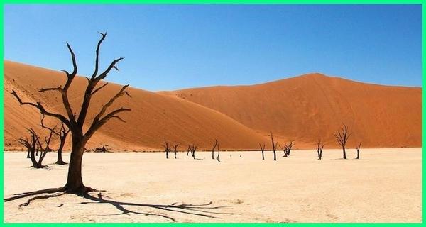 gurun pasir afrika selatan, gurun namib, gurun pasir luas afrika, gurun pasir di benua afrika, gurun pasir di afrika tts, gurun pasir di afrika adalah, gurun pasir d afrika