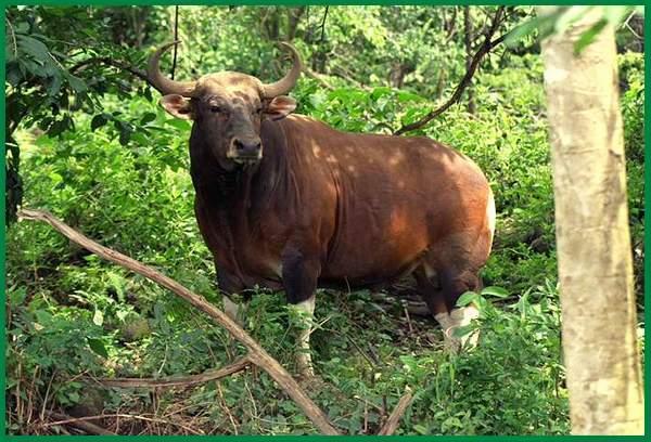 hewan obat dan khasiatnya, obat hewan dan fungsinya, obat hewan dan fungsinya pdf, hewan jadi obat, pengobatan media hewan, hewan sebagai obat tradisional, hewan sebagai obat obatan, obat hewan sapi, hewan untuk obat obatan, hewan untuk obat tradisional