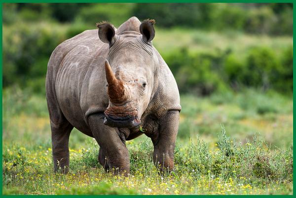 hewan untuk pengobatan, hewan untuk pengobatan tradisional, hewan yang diburu untuk pengobatan adalah, hewan obat dan khasiatnya