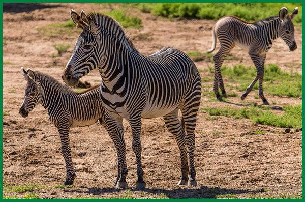 hewan yang dijadikan obat, hewan yang dijadikan obat tradisional, hewan yang menghasilkan obat, hewan obat dan khasiatnya, hewan obat tradisional
