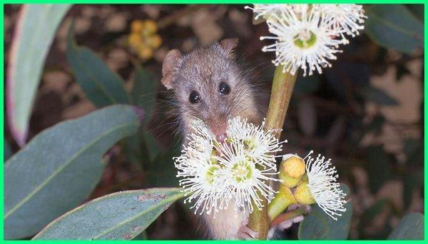 hewan yang memakan nektar, hewan nektar, hewan yang makanannya nektar adalah, hewan pemakan nektar bunga, hewan pemakan nektar disebut, hewan yang jenis makanannya nektar, hewan pemakan nektar