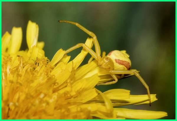 hewan yang memakan nektar, hewan nektar, hewan yang makanannya nektar adalah, hewan pemakan nektar bunga