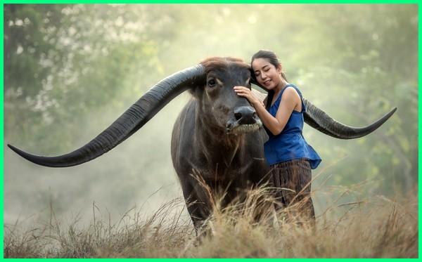 hewan tanduk besar, hewan tanduk panjang, hewan yang ada tanduk, hewan bertanduk, hewan bertanduk tanduk, hewan dengan tanduk, hewan yang memiliki tanduk sebagai alat untuk melindungi diri adalah