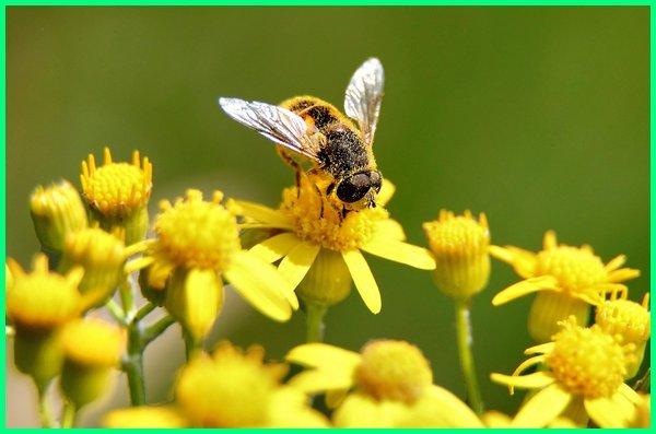 hewan pemakan nektar disebut, hewan yang jenis makanannya nektar, hewan pemakan nektar