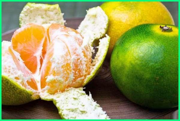 jenis jeruk jepang, jenis jeruk yang banyak dibudidayakan di indonesia, jenis jeruk yang dijual di indonesia