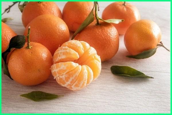 jeruk mandarin, jeruk-jeruk yang manis, macam-macam jeruk manis