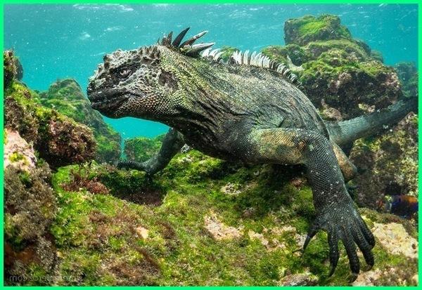 tiga manfaat reptil, manfaat dan kerugian reptil, peranan dan manfaat reptil, pengertian dan manfaat reptil, manfaat reptil bagi manusia, contoh dan manfaat reptil, manfaat reptil dan contohnya