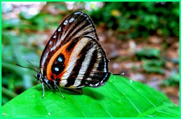 contoh makhluk hidup metamorfosis sempurna, makhluk hidup yang mengalami metamorfosis sempurna, makhluk hidup yang mengalami metamorfosis, metamorfosis merupakan ciri makhluk hidup