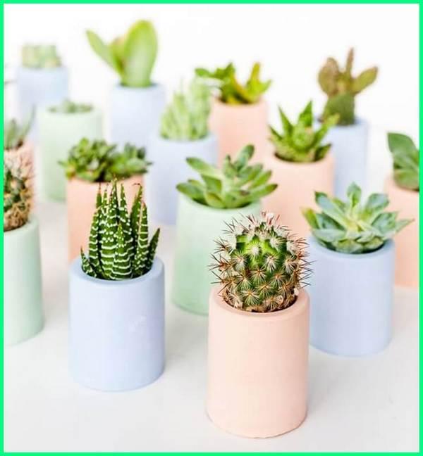 pot kecil kaktus, pot bunga kecil warna warni, pot bunga kecil hiasan, tanaman di pot kecil, jual pot hias kecil, pot plastik kecil jogja, pot tanaman kecil, tokopedia pot kecil
