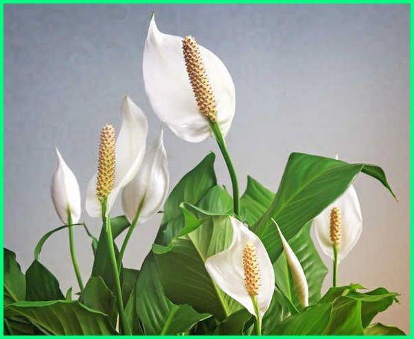 tanaman buat vertical garden, contoh tanaman vertical garden, tanaman cocok vertical garden, tanaman yang digunakan untuk vertical garden, jenis tanaman vertical garden