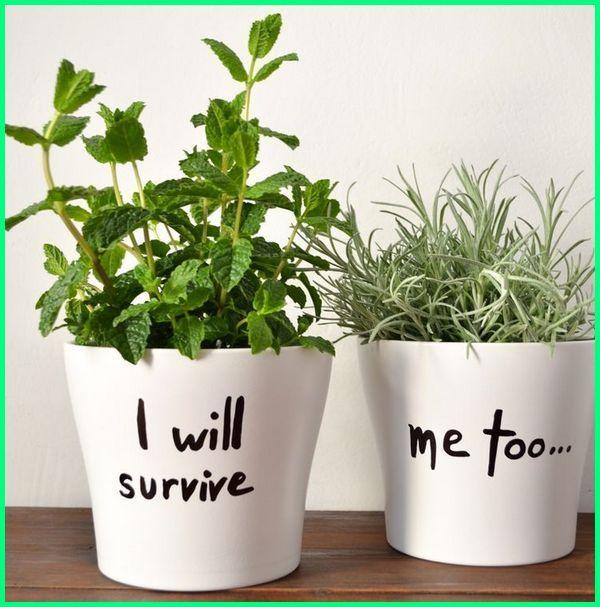 pot unik untuk kaktus, pot kecil warna warni, tanaman pot kecil dalam rumah, tanaman di pot kecil, menanam di pot kecil, pot keramik kecil malang, pot bunga minimalis kecil, pot keramik putih kecil, pot kecil keren cantik