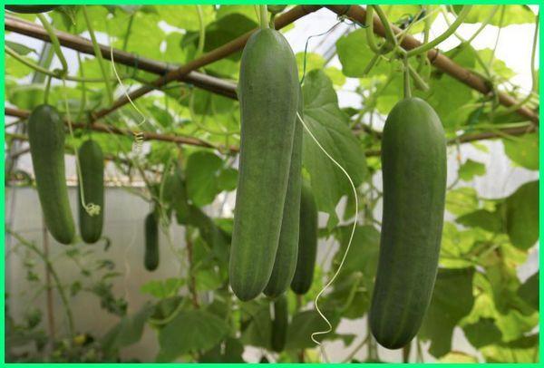 tanaman mudah tumbuh, tanaman yg mudah berbuah, tanaman yang mudah berkembang, tanaman mudah dipelihara, tanaman mudah hidup