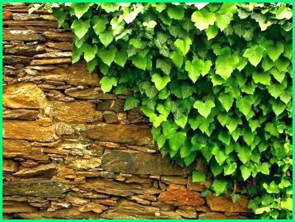cara tanam vertical garden, cara menanam tanaman vertical garden, cara merawat tanaman vertical garden, cara membuat tanaman vertical garden, nama tanaman vertical garden, tanaman hias vertical garden