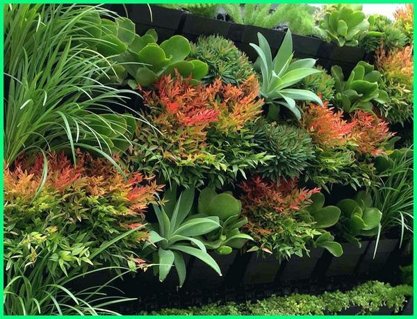 16 Tanaman Hias Yang Cocok Untuk Vertical Garden Dunia Fauna Hewan Binatang Tumbuhan Dunia Fauna Hewan Binatang Tumbuhan