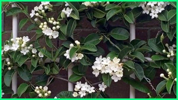 bibit tanaman vertical garden, media tanaman vertical garden, gambar tanaman vertical garden, tanaman buat vertical garden, contoh tanaman vertical garden, tanaman cocok vertical garden, tanaman bunga vertical garden yang harum mewangi