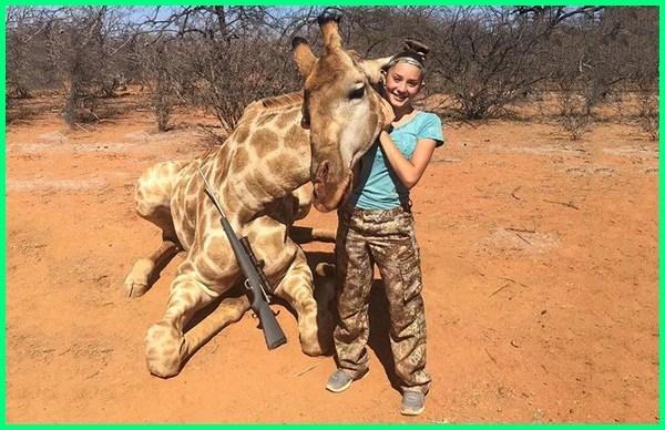 jerapah tewas di tembak oleh pemburu, pemburuan hewan legal dan ilegal, perburuan jerapah
