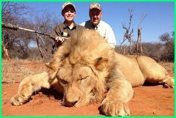 artikel perburuan hewan, contoh perburuan hewan, dampak perburuan hewan liar, dampak perburuan hewan langka, dampak perburuan hewan bagi lingkungan, perburuan singa liar, lukisan perburuan singa, perburuan singa afrika, berburu singa afrika