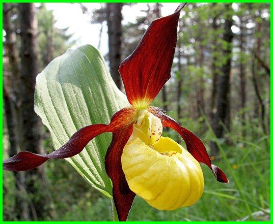bunga aneh yang ada di dunia, bunga yang paling aneh di dunia, gambar bunga yang aneh, bunga yang paling aneh, bunga yang namanya aneh, bentuk bunga yang aneh, bunga yang sangat aneh