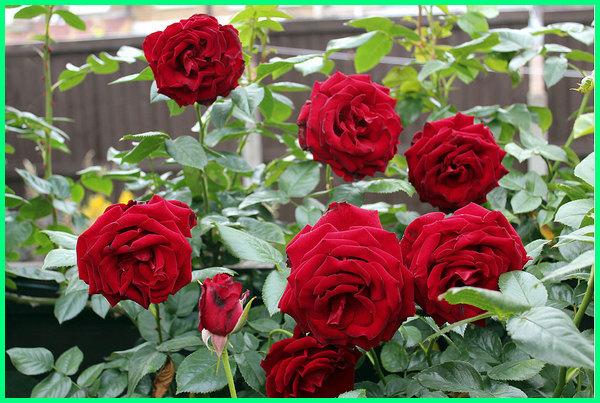 10 Bunga Yang Paling Wangi Hadirkan Keindahannya Di Tamanmu