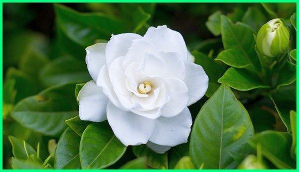 10 Bunga Yang Paling Wangi Hadirkan Keindahannya Di Tamanmu Dunia Fauna Hewan Binatang Tumbuhan Dunia Fauna Hewan Binatang Tumbuhan