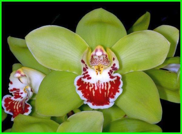 bunga termahal di dunia 2017, bunga termahal di indonesia 2019, bunga termahal di dunia versi on the spot, bunga termahal 2018, bunga termahal saat ini, bunga termahal indonesia, bunga termahal di dunia